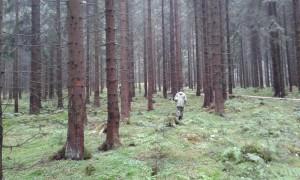 LS Eibenstock - výchozí situace, přeměna čistých smrčin na smíšený les