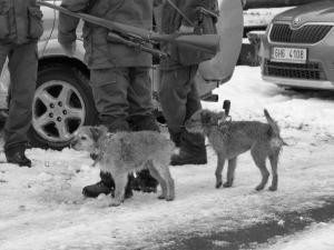 Čtyřnozí pomocníci - border teriéři.