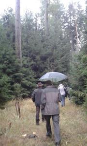 Začátek návštěvy lesního porostu.