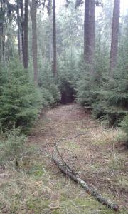Zpřístupnění lesa.