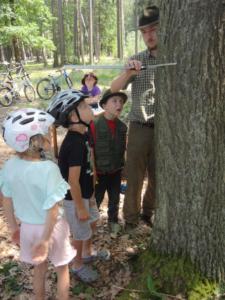 Měření stromu.